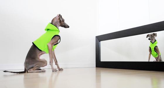 イタグレ・ウィペット犬服|スポーツニット|パラキートグリーン