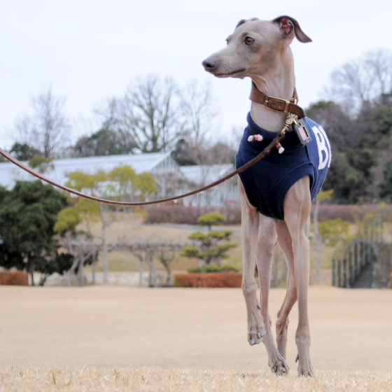 犬服|アルファベットカジュアルスポーツ|選べる4タイプ×リブ3カラー(ネイビー/レッド/イエロー)