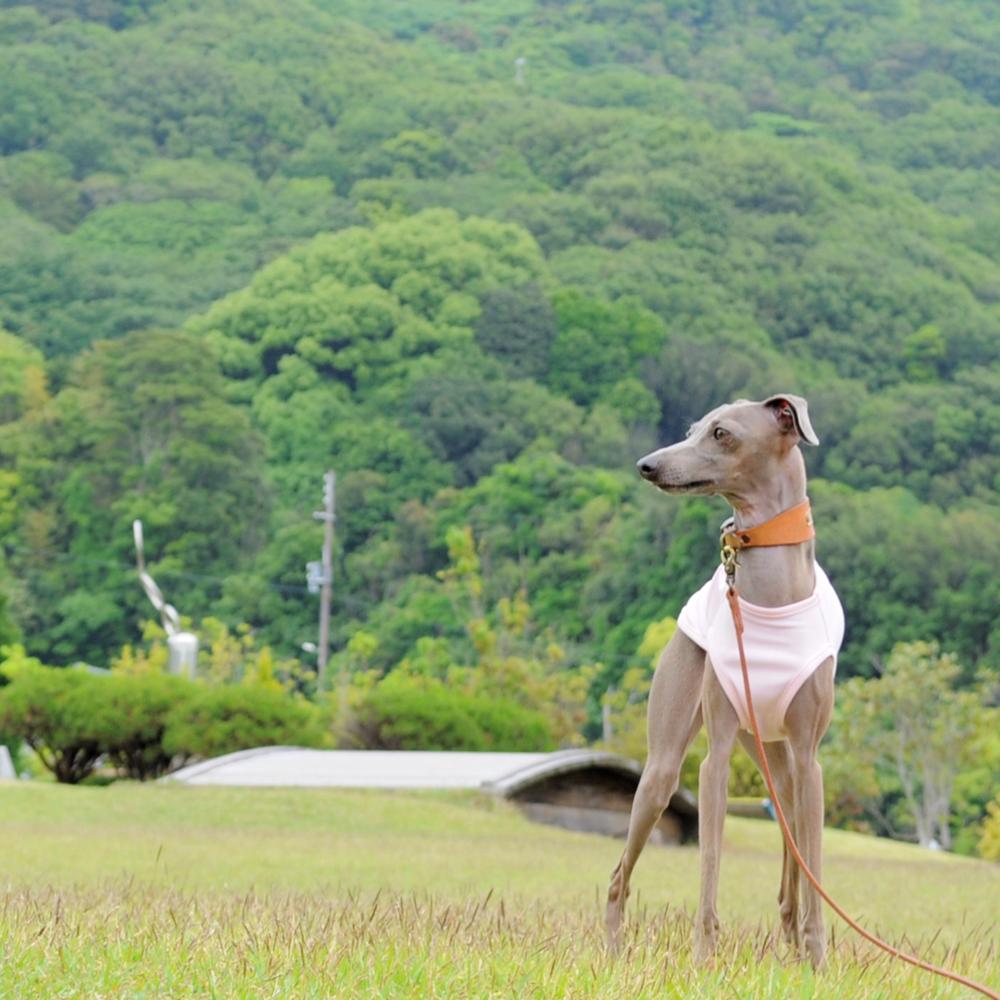 犬服|スポーツニット/抗菌防臭/吸湿速乾/UVカット|選べる3タイプ×3カラー(ピンク/イエロー/ネイビー)