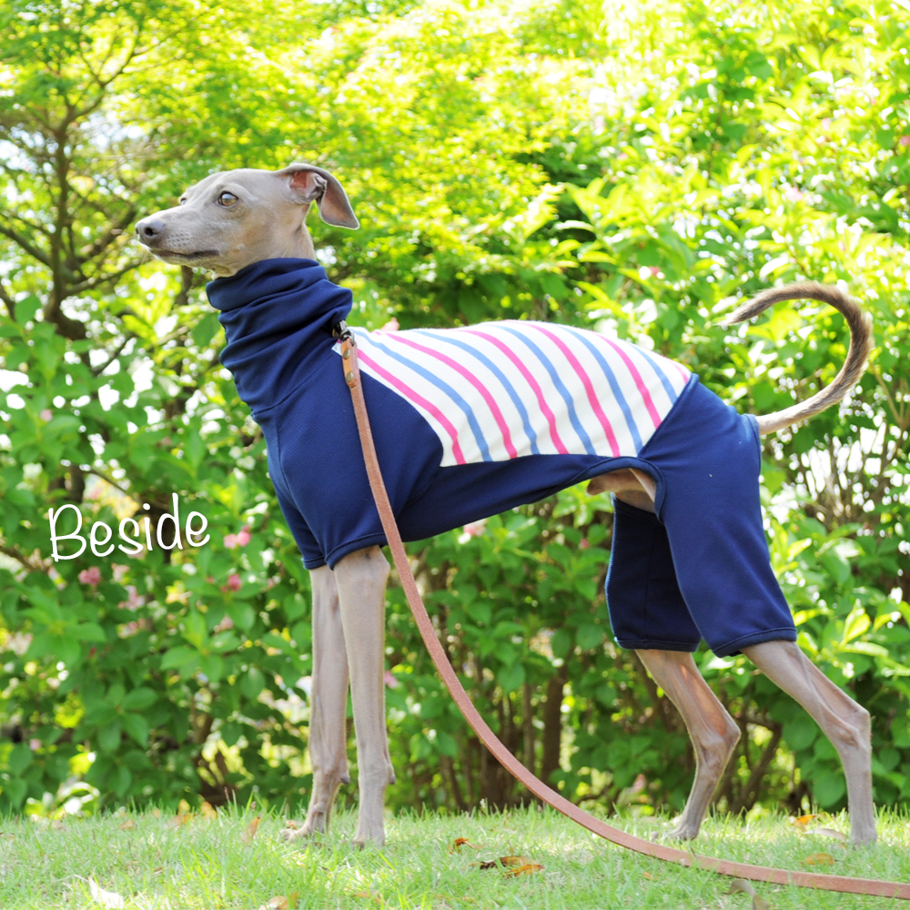 犬服|ヨットブルー&ローズレッドボーダー「スポーツスタイル」|選べる3タイプ×3カラー(ホワイト/ピンク/ネイビー)