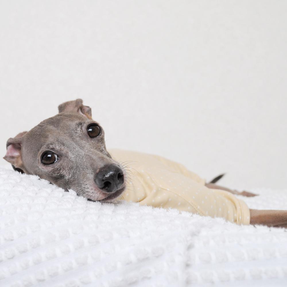 犬服|ぱじゃま「小さなまる。」|選べる4タイプ×6カラー(ホワイト/ブルー/ピンク/パープル/ネイビー/ベージュ)