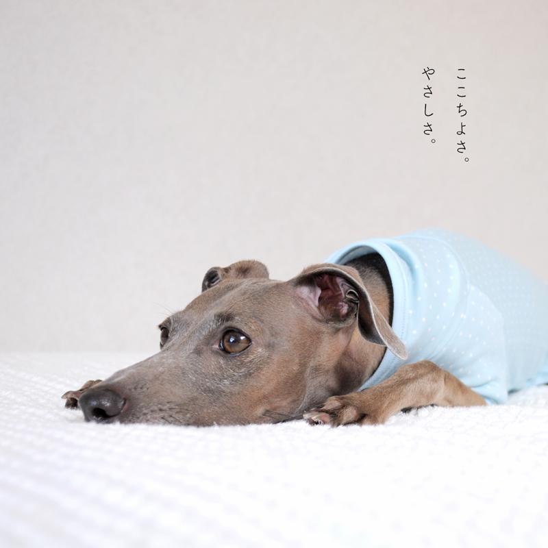 犬服|ぱじゃま「小さなまる。」|選べる3タイプ×3カラー(ベージュ/ブルー/ピンク)