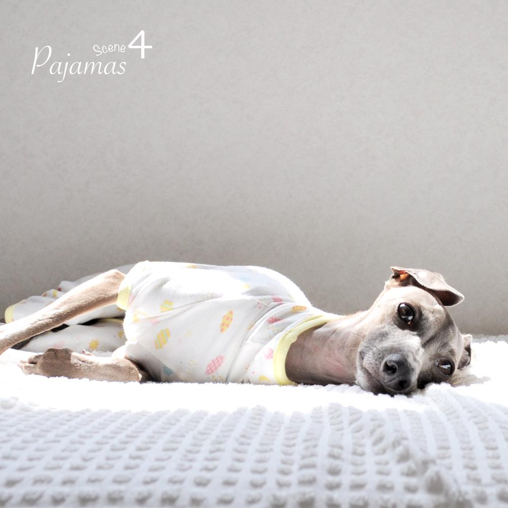 犬服|ぱじゃま「Happy life」|選べる3タイプ×3カラー(おてんき/のりもの/どうぶつ)