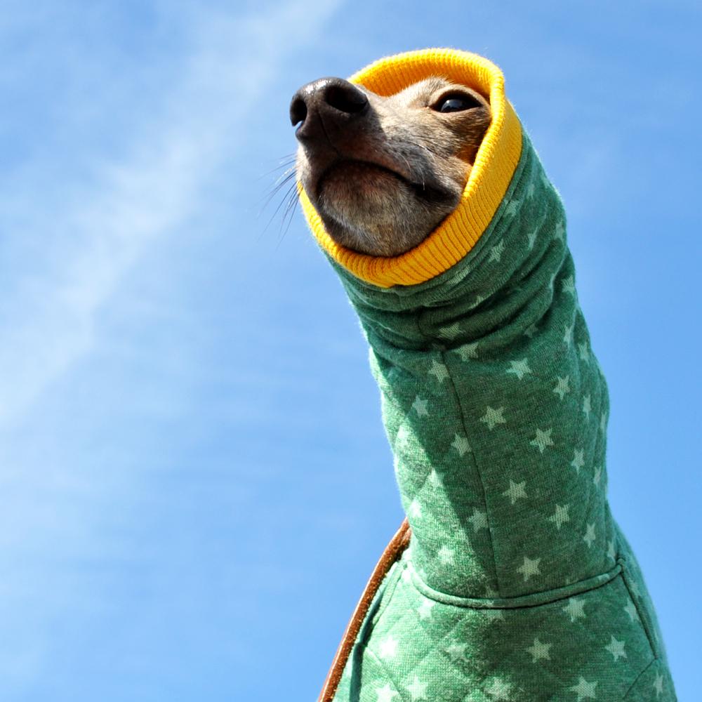 犬服|カンガルーポケットのスター☆ウエア|選べる3タイプ×5カラー(ピンク/ブルー/ブラウン/グレイ/グリーン)