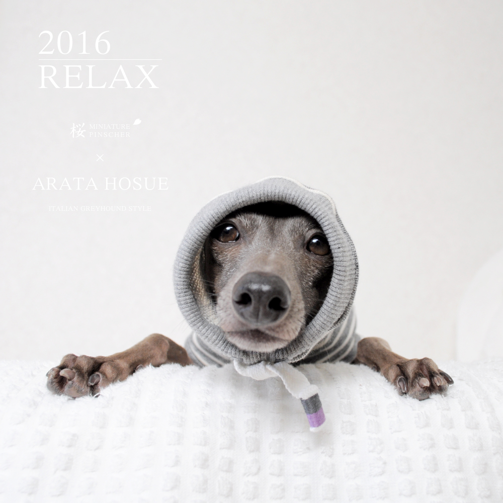 犬服|2016.RELAX|MINIATURE PINSCHER 桜 × ARATA HOSUE コラボレーション|選べる3タイプ×2カラー(ライトグレイ/ダークグレイ)