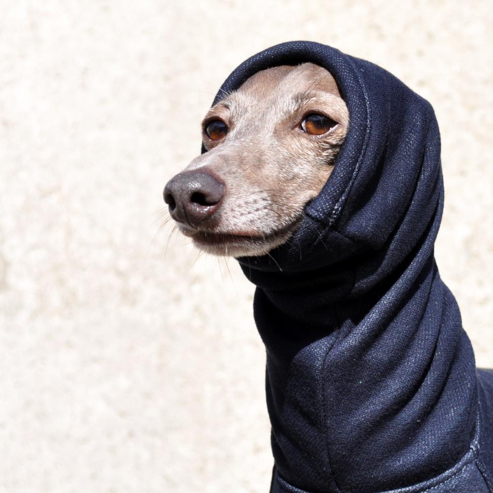 犬服|夏より暖かい冬 Winter Sports|裏起毛ボンバーヒートニット(保温)|選べる3タイプ×5カラー(パールホワイト/スレートグレイ/プルシアンブルー/マホガニーブラウン/ワインレッド)