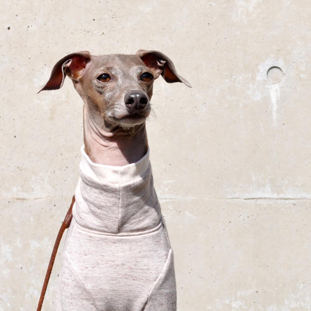 犬服|ミラノに魅せられて|ミラノリブ|選べる4タイプ×2カラー(ハニースィート/スカイグレイ)