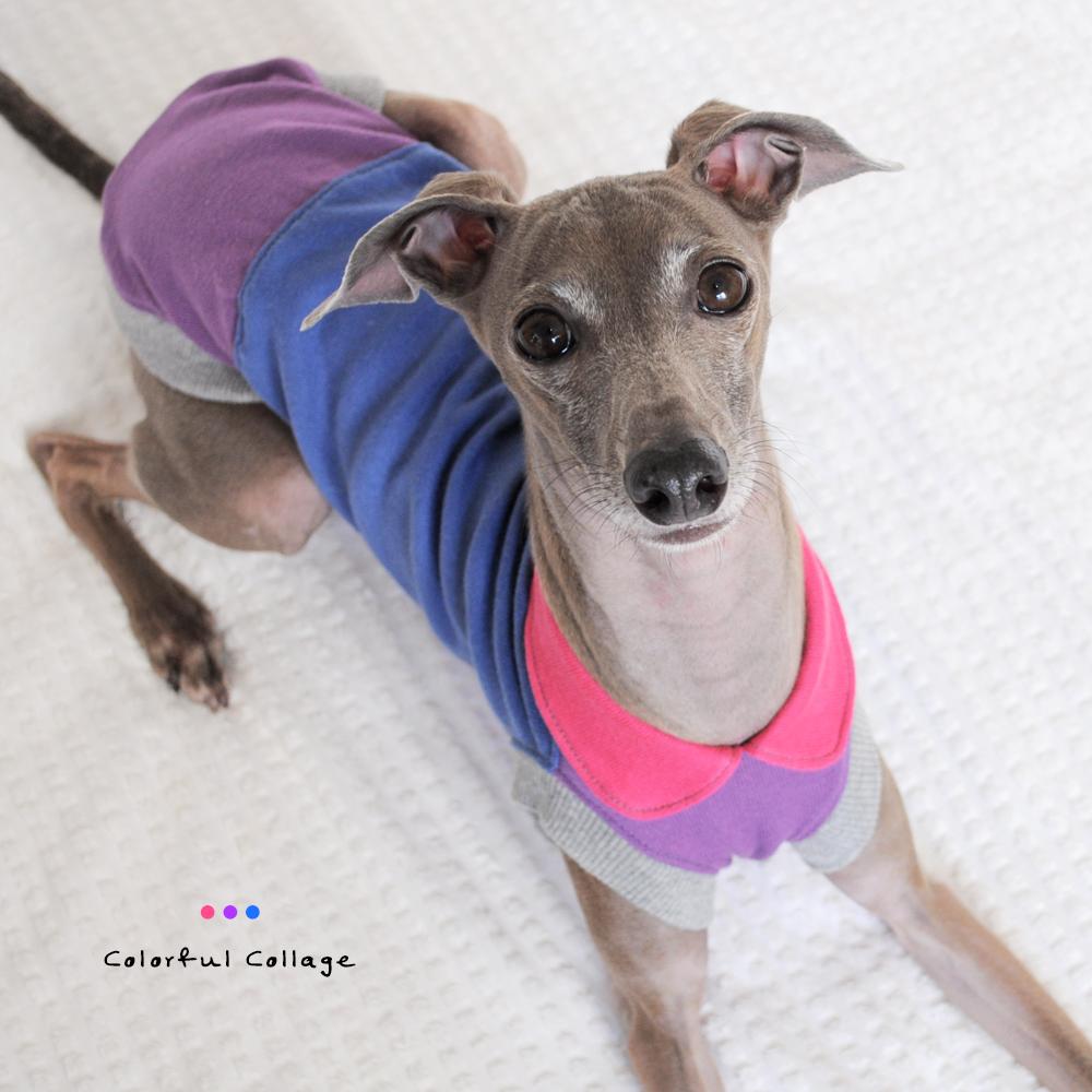 犬服|Colorful Collage|選べる4タイプ×自由に選べる配色(ピンク×パープル×ブルー)「丸襟カスタマイズ可能」