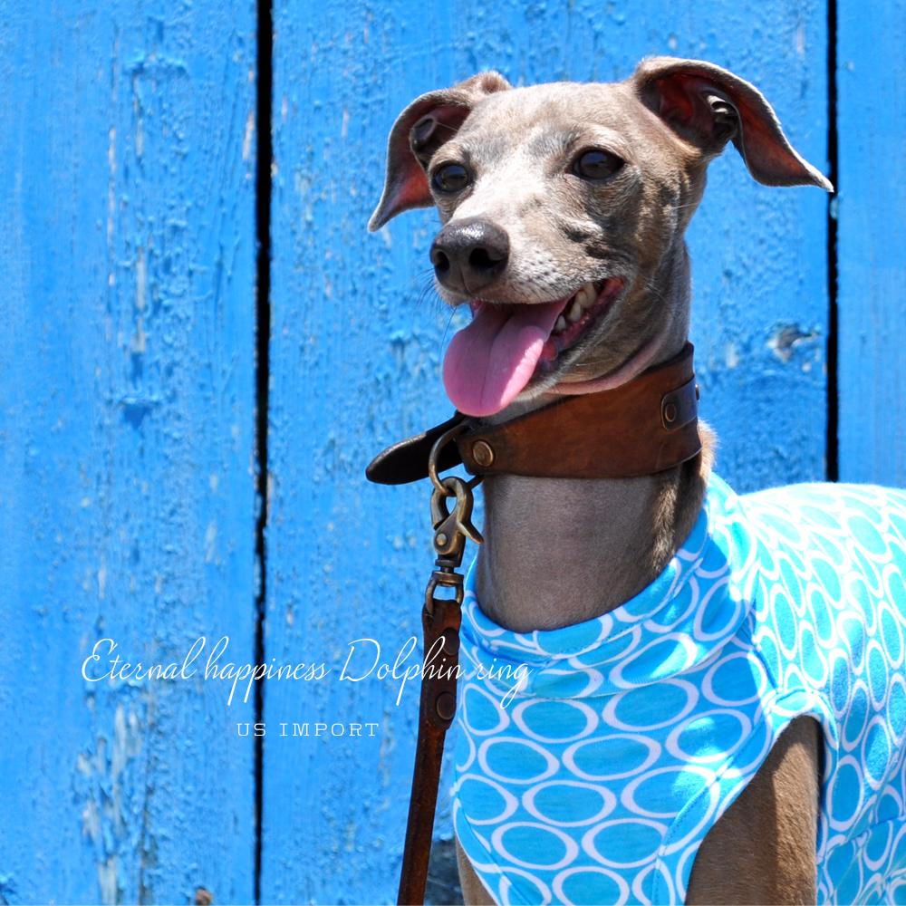 犬服|Eternal happiness Dolphin ring|アメリカ輸入ニットプリント|選べる4タイプ