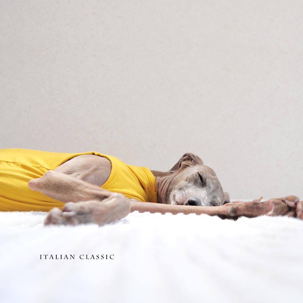 犬服|Italian Blue|イタリア製ストレッチ天竺ニット|選べる4タイプ