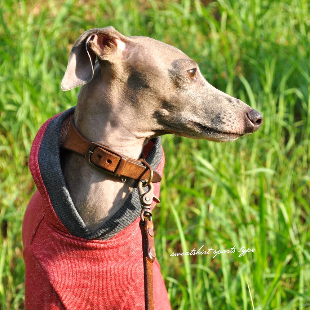 犬服|トレーナー|スポーツタイプ|選べる4タイプ×3カラー(ポピーレッド/栗色/ロイヤルブルー)