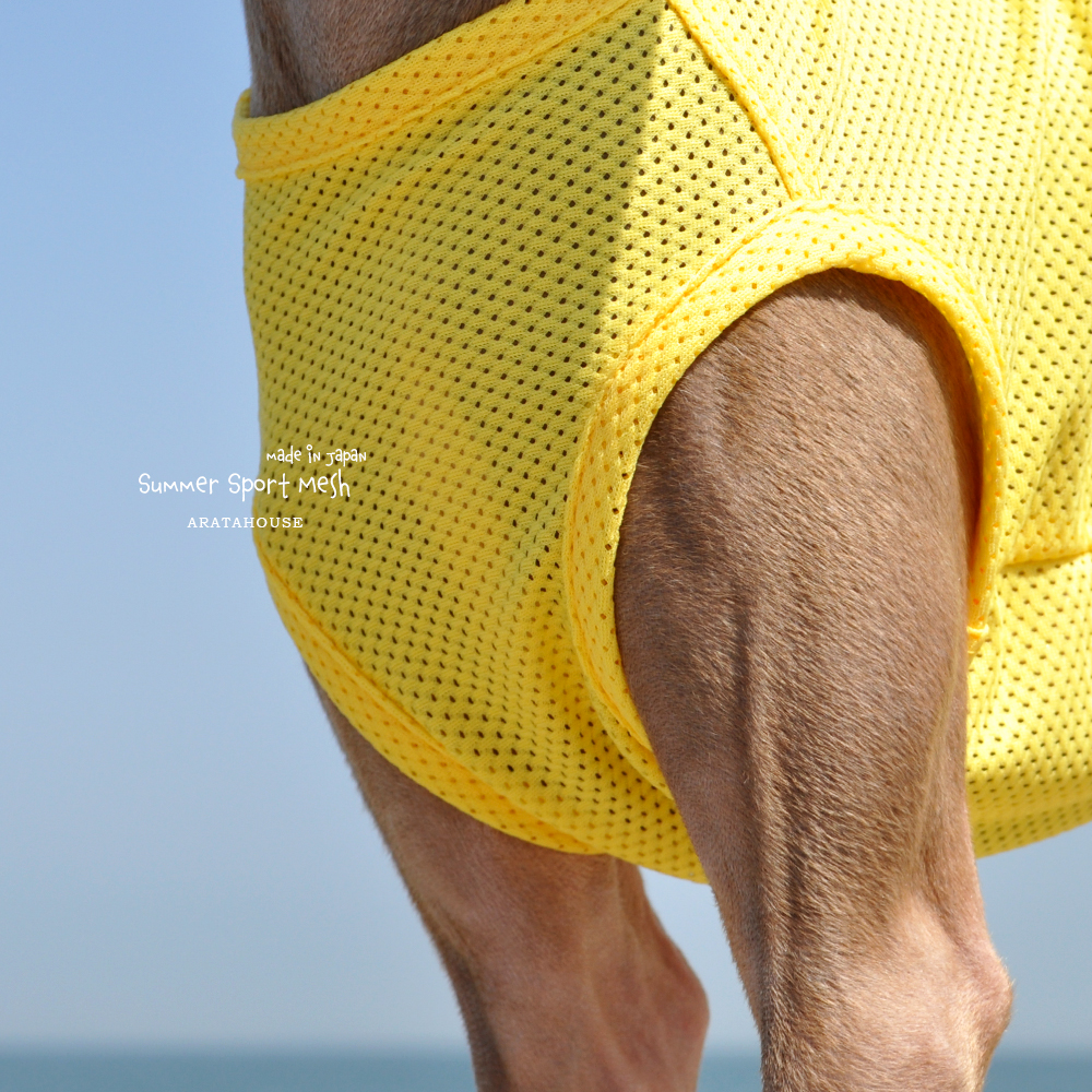 犬服|Summer Sport Mesh|選べる4タイプ×3カラー(パステルブルー/パステルイエロー/パステルピンク)