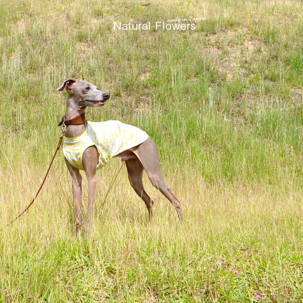 犬服|Natural Flowers|綿100%ボーダーガーゼ|選べる3タイプ