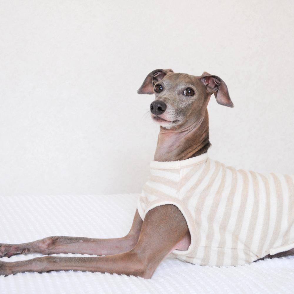 犬服|柔らかな縞模様のお洋服|ネップ裏毛ボーダー|選べる4タイプ×2カラー(亜麻色/空色)